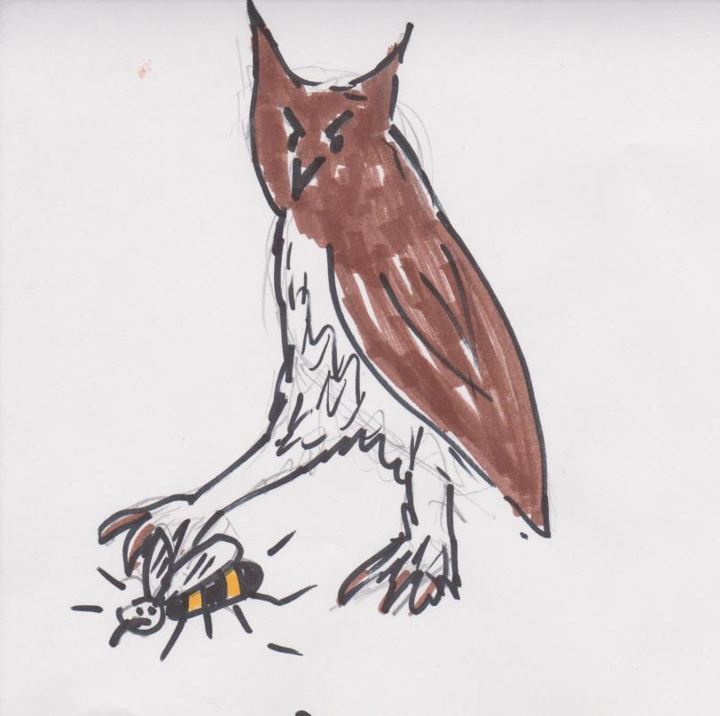 Owl wasp 001