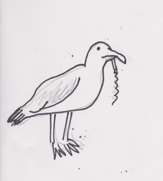 Seeg Gull 001